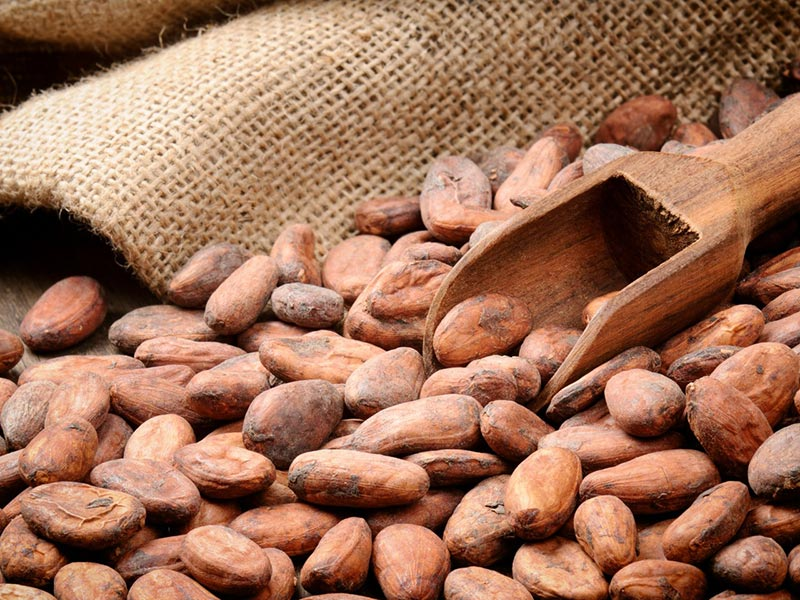 Ingrosso Super cibi Cacao